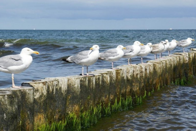 Seagulls on groyne